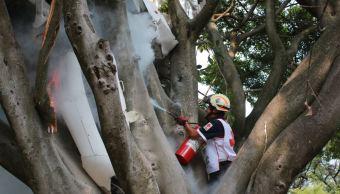 Avioneta cae sobre copa de árbol en Cuernavaca