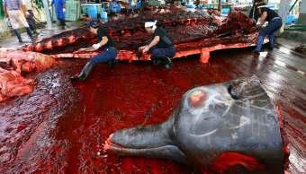 Japón propone acabar con la prohibición de caza de ballenas