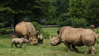 Huracán Florence: Zoológico protege a más de mil animales