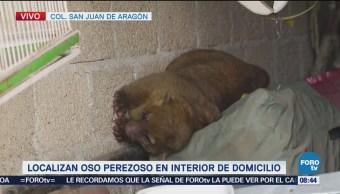 Localizan oso perezoso en domicilio de San Juan de Aragón