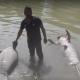 Tabasco declara emergencia por muerte de manatíes y enfermedades