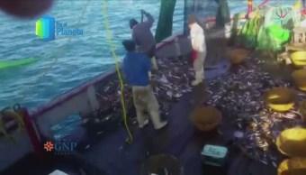 Mar de Cortés, biodiversidad bajo amenaza por pesca