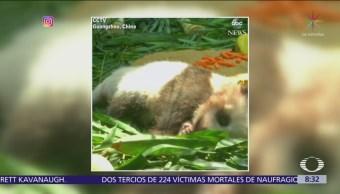 Panda bebé hace su debut en China