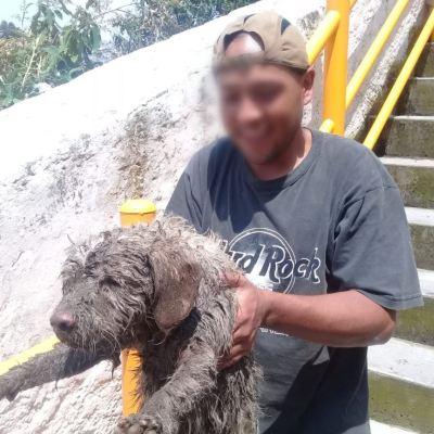 Rescatan a perro atrapado en barranca de la CDMX