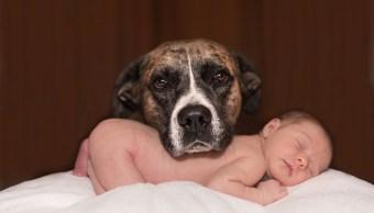 Perro Bebé Bebé Vómito Louie Chloe
