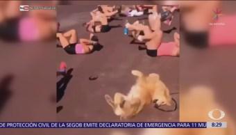 Perro hace gimnasia con un grupo de mujeres