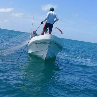 Pesca ilegal afecta captura de pulpo en Campeche