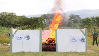 PGR y Sedena destruyen narcóticos en Chiapas