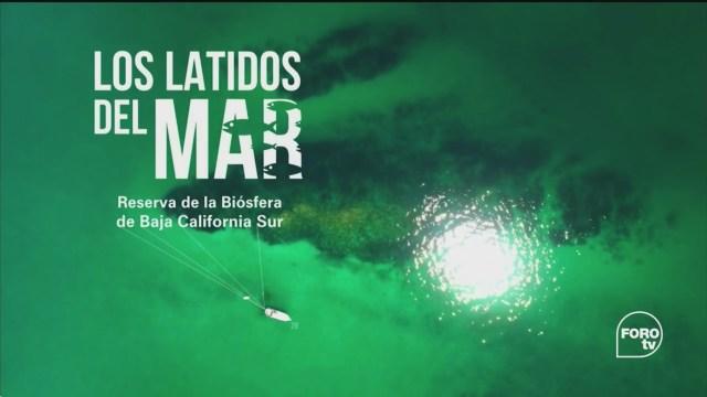 Por el Planeta Los latidos del Mar de Cortés