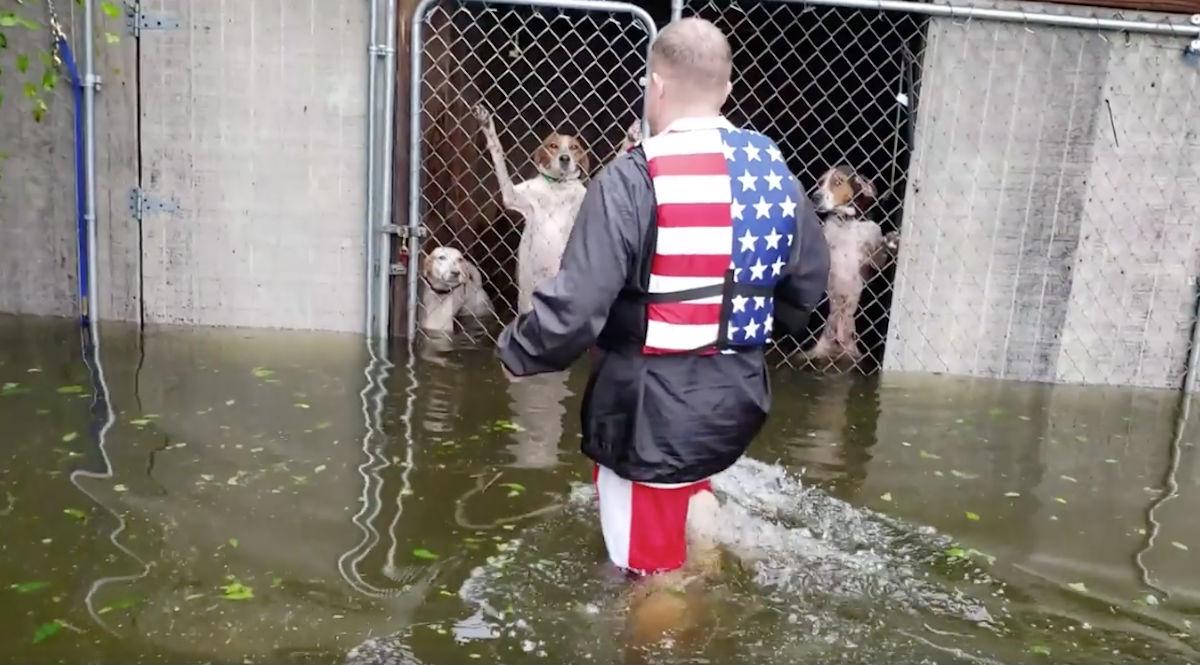 Perros-Rescatados-Huracan-Florence-Morir-Ahogados-Inundaciones