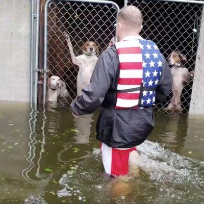 Video: Rescatan a 6 perritos a punto de morir ahogados por 'Florence' y se vuelve viral