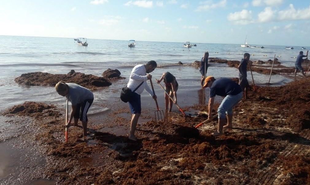 Afectaciones por sargazo en Tulum, Quintana Roo