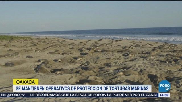 Se mantienen operativos para proteger tortugas marinas