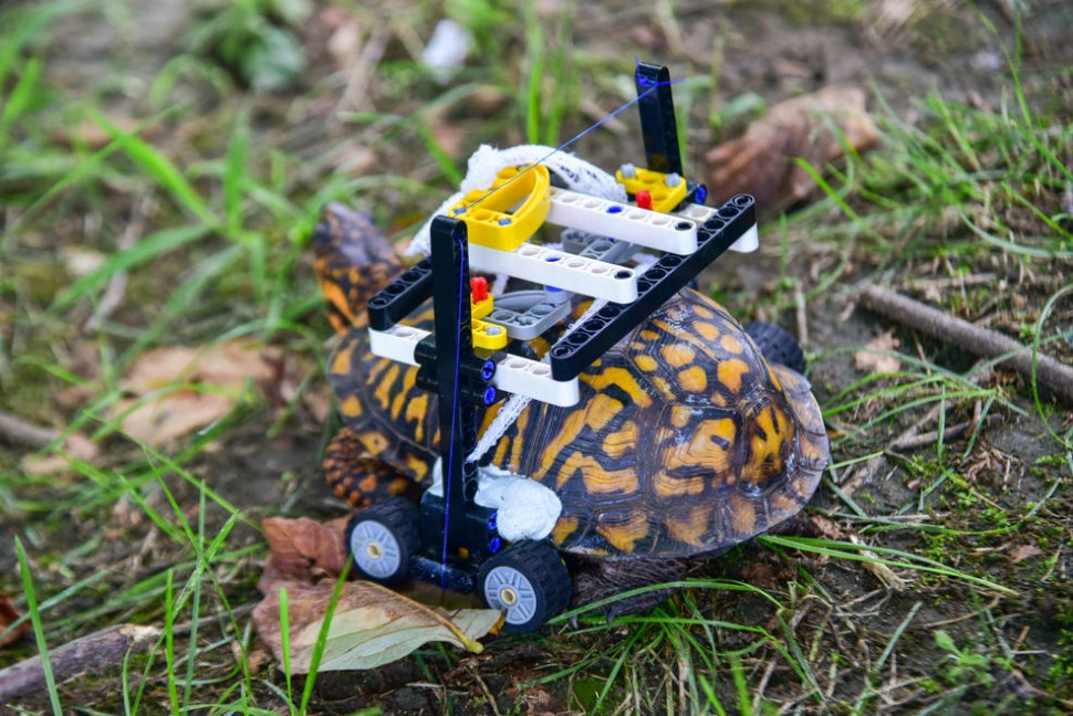 Construyen silla de ruedas con bloques Lego para tortuga