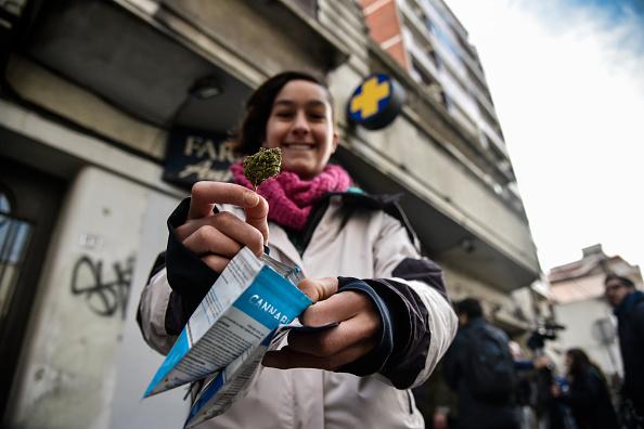 Uruguay vende mil 244 kilos de marihuana en farmacias