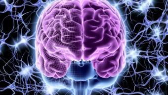 Científicos logran conectar tres cerebros humanos