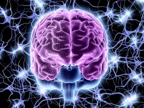 foto cerebro te recompensa por comer
