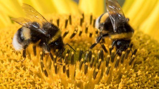 México alberga dos mil especies de abejas.