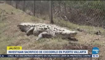 Autoridades de Jalisco toman acciones para proteger a los cocodrilos