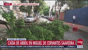 Cae árbol en la colonia Ampliación Granada