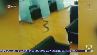 Cobra atraviesa techo de un banco y cae sobre empleados