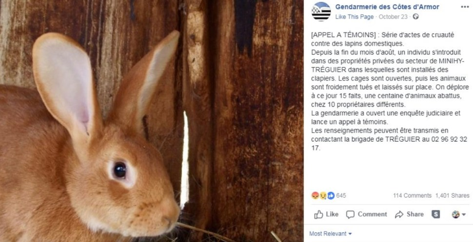 Asesino en serie de conejos aterroriza a la Bretaña francesa
