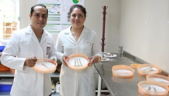 Estudiantes del IPN crean los primeros cubiertos comestibles