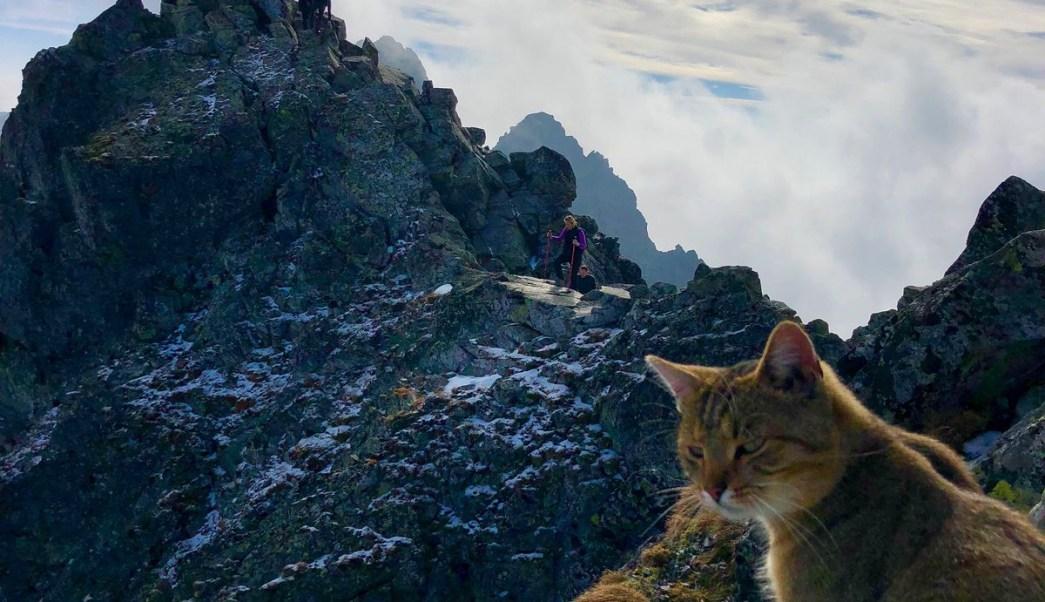 Alpinistas Encuentran Gato Pico Más Alto Polonia, Montañistas, Gato, Gatos, Polonia, Montañas