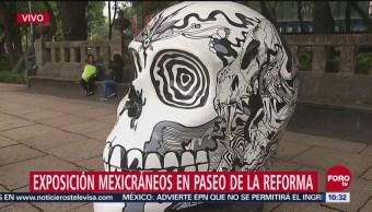 Exposición Mexicráneos Paseo De La Reforma