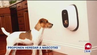 Extra, Extra: Proponen heredar bienes a mascotas