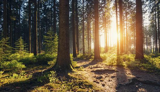 Captan sorprendente momento en que un bosque respira