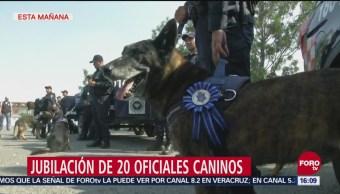 Jubilación de oficiales caninos
