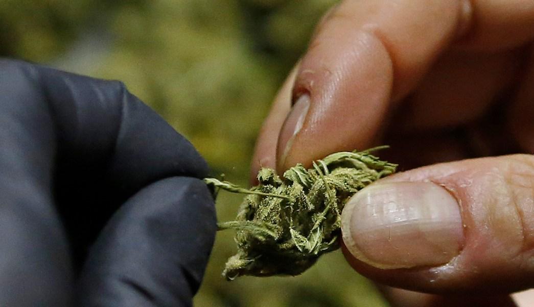 Mariguana THC Ratón Ratones Viejo Vejez Dosis Diaria