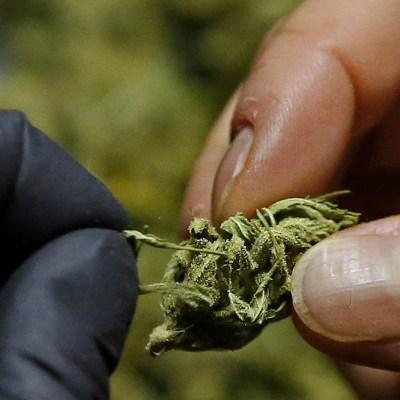 Una dosis diaria de marihuana en la vejez podría prevenir la demencia: Estudio
