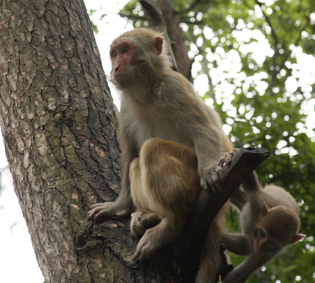 Monos asesinaron a un hombre a ladrillazos — India