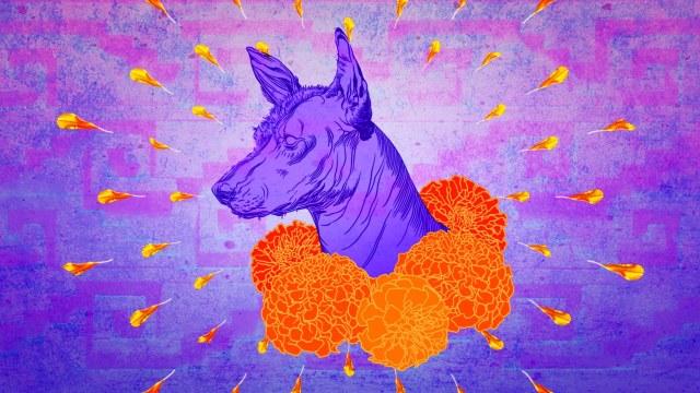 Xoloitzcuintle Historia, Xoloitzcuintle Leyenda, Xolotizcuintle, Mictlan,, Xoloescuincles, Perro Xolo, Perros Xoloitzcuintles
