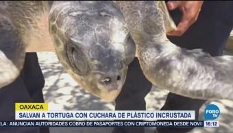 Operan a tortuga con cuchara de plástico incrustada
