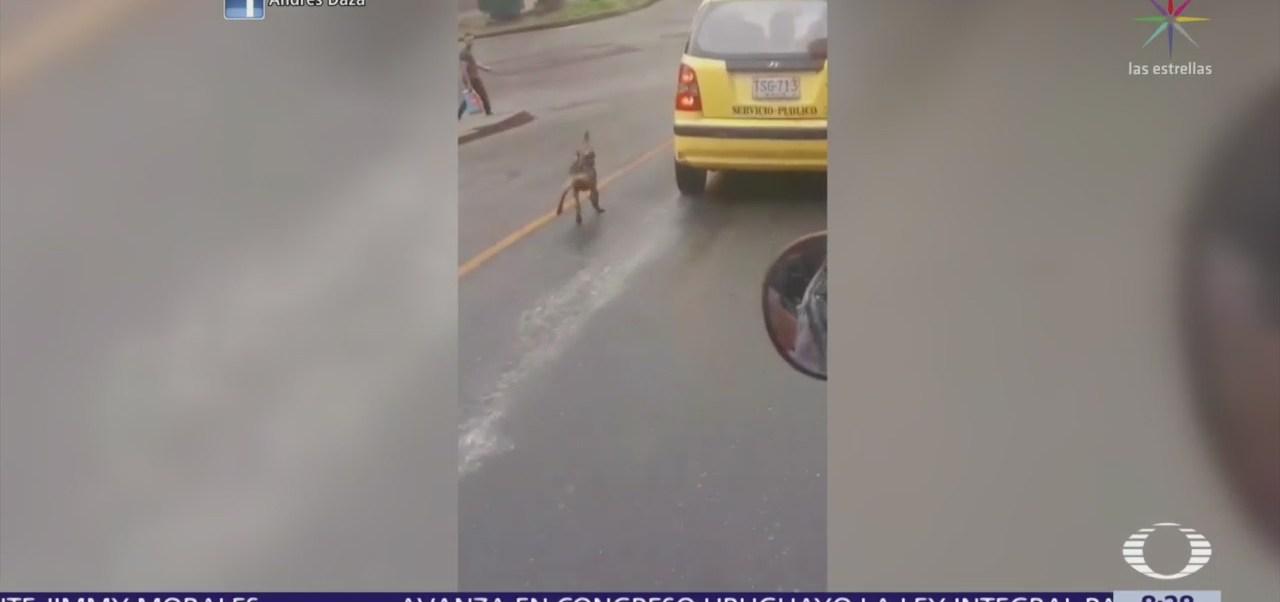 Perrito corre 20 cuadras para alcanzar a dueños después de abandonarlo
