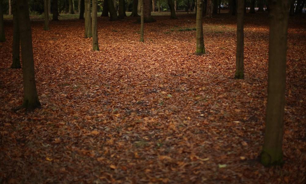 Por Qué Se Caen Las Hojas De Los árboles En Otoño