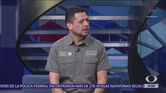 Por qué hay ataques de cocodrilos en México