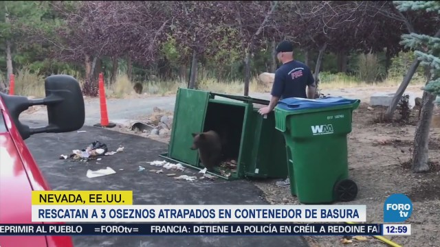 Rescatan a tres oseznos en un contenedor de basura en EU