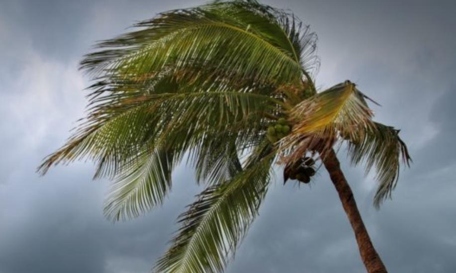 Tormenta 'Tara' podría cambiar de trayectoria y acercarse más a costas de México