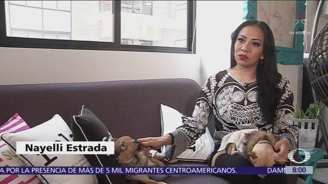 México podría permitir dejar herencia a mascotas
