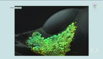 Anuncian A Ganadores De Fotografía Microscópica