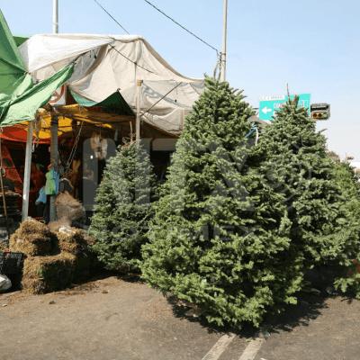Inicia la búsqueda del perfecto árbol de Navidad en mercados