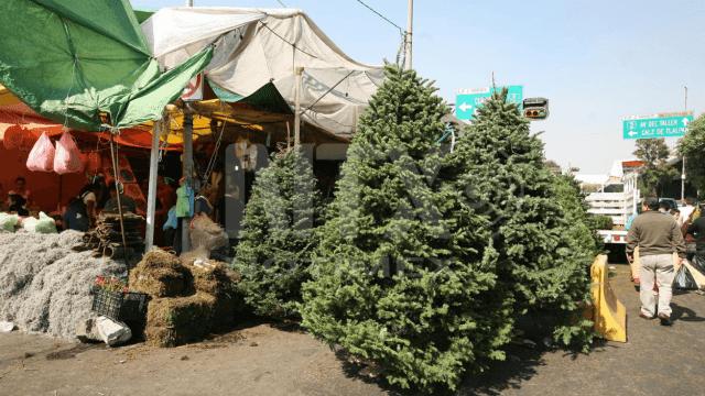 Inicia la búsqueda del perfecto árbol de Navidad
