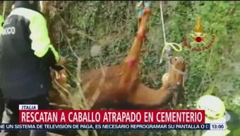 Bomberos italianos rescatan a un caballo de un cementerio
