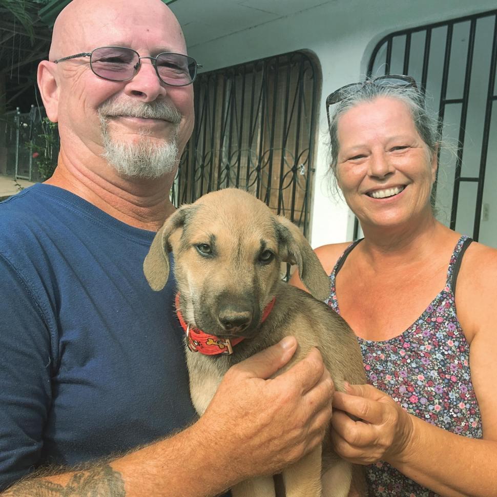 Buster, uno de los cachorros machos de Marie, fue adoptado por una pareja de Costa Rica el miércoles 7 de noviembre (Tania Capelutti Facebook)