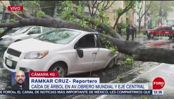 Caída de árbol afecta a tres autos en avenida Obrero Mundial, CDMX