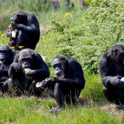 ¿Qué especies dominarán la Tierra si se extinguiera la humanidad?
